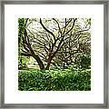 Vines And Oaks Framed Print
