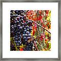 Vines Of October Framed Print by Roger Bailey