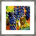 Vineyard 2 Framed Print