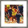 Vineyard 8 Framed Print