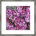 Violet Framed Print by Cary Shapiro