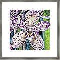 Violet Dotted Orchid Framed Print