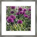 Violet Flowerbed Framed Print