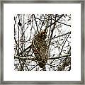 Visiting Owl 2 Framed Print by Rebecca Adams