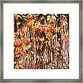 Vitaceae Family Ivy Wall Abstract Framed Print