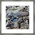 Wadering Tattler At Low Tide Framed Print