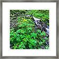Wahkeena Falls In The Columbia River Gorge Framed Print