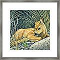 Waiting For Mom-mule Deer Fawn Framed Print