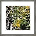 Walking Down Senators Highway Framed Print