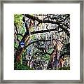 Walking In Forsyth Park Framed Print