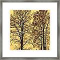 Walkway Along The Dyke Framed Print