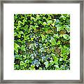 Wall Of Ivy Framed Print