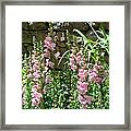 Wall Of Snapdragons Framed Print