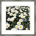 Wall To Wall Daisies Framed Print