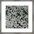 Wallflowers 2  Framed Print