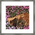 Wallflowers 3 Framed Print