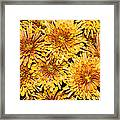 Warm And Sunny Yellows Golds And Oranges Framed Print