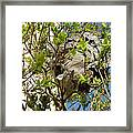 Wasps' Nest Framed Print