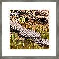 Watching And Waiting Framed Print