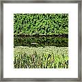Water And Green Framed Print