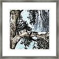 Water Beyond The Tree Framed Print