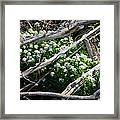 Water Cress Framed Print