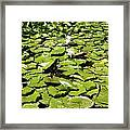 Water Lillies Framed Print