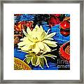 Water Lilly Pond Framed Print
