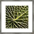 Water Lily From Below Framed Print