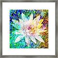 Water Lily With Iridescent Water Drops Framed Print