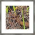 Water Snake In Hiding Framed Print
