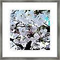 Blanche Framed Print