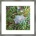 Web In Moss Framed Print