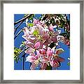 Weeping Cherry Tree Blossoms Framed Print