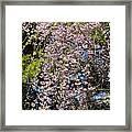 Weeping Cherry Tree Framed Print