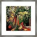 West Coast Rainforest Framed Print