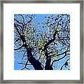 Western Michigan Trees 1 Framed Print