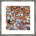 Wet Autumn Leaves Framed Print