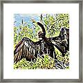 Wet Feathers Framed Print