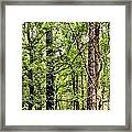 When The Forest Calls To Me Framed Print