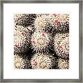 White Cactus Pink Flowers No1 Framed Print
