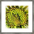 White Daisy Center Framed Print