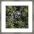 White Feather And Green Framed Print