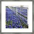White Fence - Blue Bonnets Framed Print