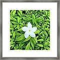 White Flower On Green Framed Print