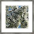 White Flowering Crabapple Tree Framed Print
