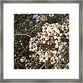 White Flowers Tree Framed Print by Ioana Ciurariu