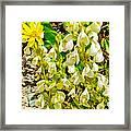 White Locoweed On Highline Trail In Glacier National Park-montana Framed Print
