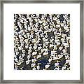White Pelican Party Framed Print