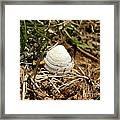 White Shell Framed Print